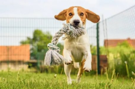 What are the different benefits of pet treat?
