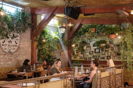 Cannabis Cafes Are Becoming More And More Popular In The United States