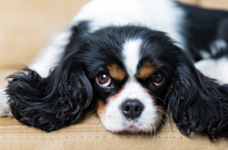 4 Great Dog Breeds for Apartment Dwellers