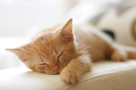 Five Ways On How To Boost Your Feline Friend's Immune System