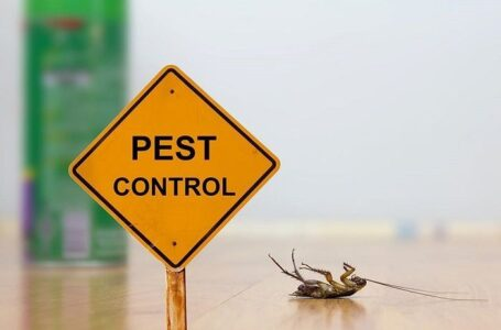 Why are pest controlling services crucial?