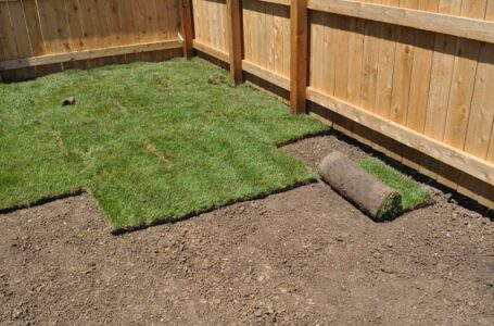 Is It Necessary to Till the Soil Before Laying the Sod?