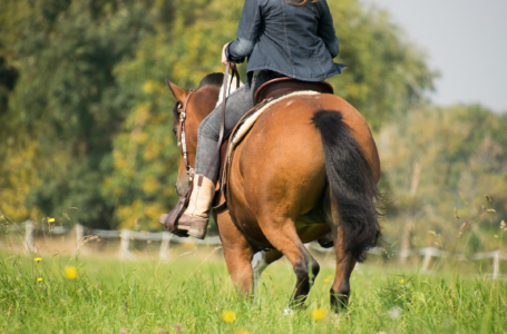 8 Pieces of Equestrian Equipment You Need
