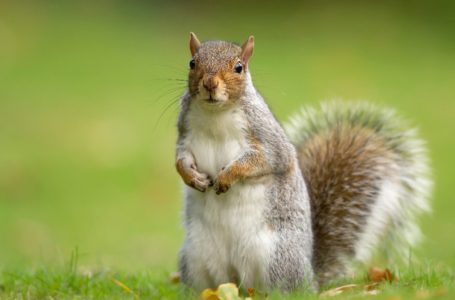 How to Control Squirrels on Your Property