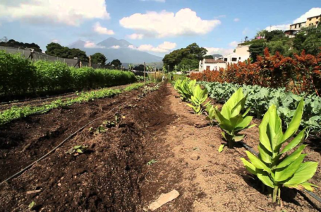 Tips for maintaining farm lands and gardens