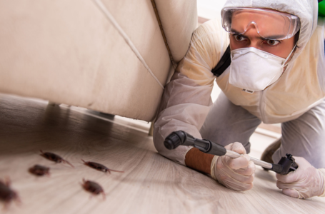 How to select the best insect exterminator
