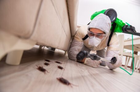 Pest control marketing: Get an agency for your business