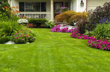Tips for Excellent Lawn Care