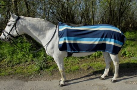Benefits of buying from Discount Equestrian