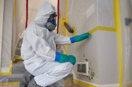 Mold Testing Services from Experts