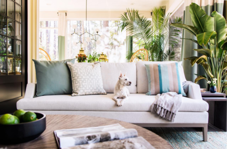 Tips for Cleaning and Maintaining Your Upholstery